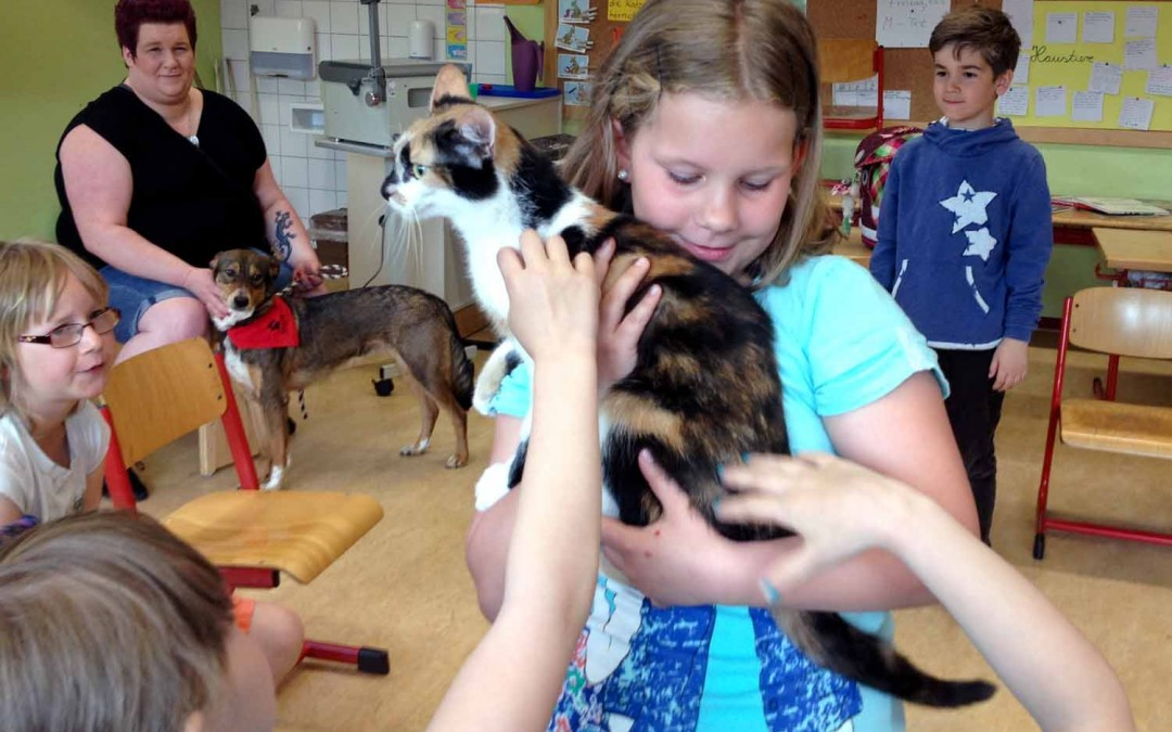 Haustiere in Klasse 2